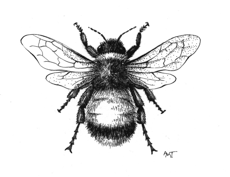 Vintage Bee Drawing at PaintingValley.com.
