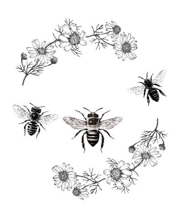 Bee clipart vintage, Bee vintage Transparent FREE for.