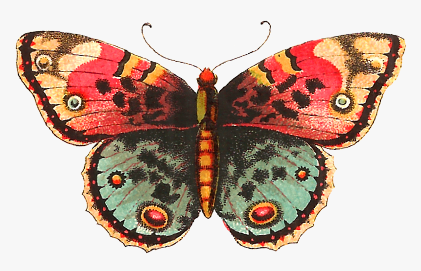 Moth Clipart Vintage Butterfly.