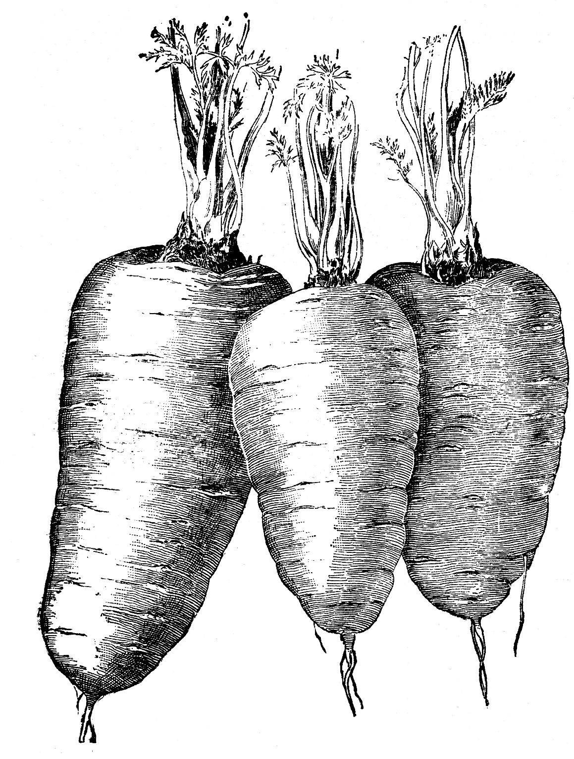 Vintage Vegetable Clip Art.