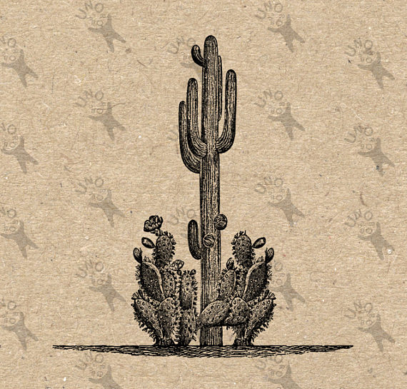 Vintage graphic Desert Cactus Cacti Wild West Texas Instant.
