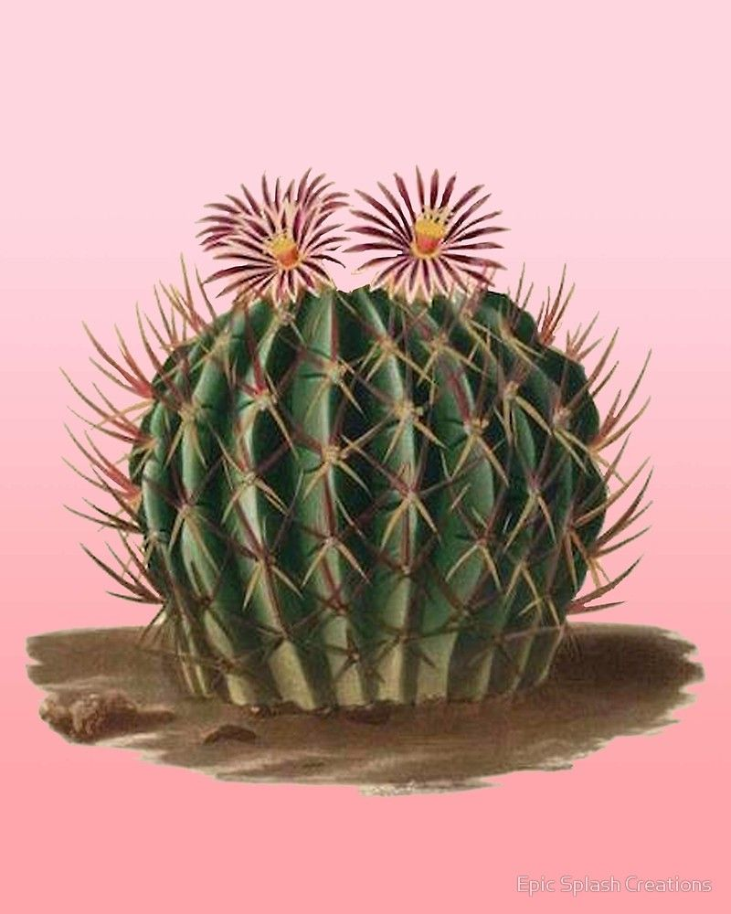 Pink vintage cactus vintage sketch by Epic Splash Creations.