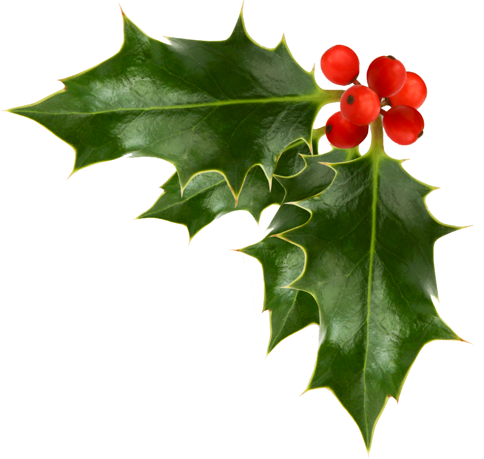 Free Christmas Holly, Download Free Clip Art, Free Clip Art.