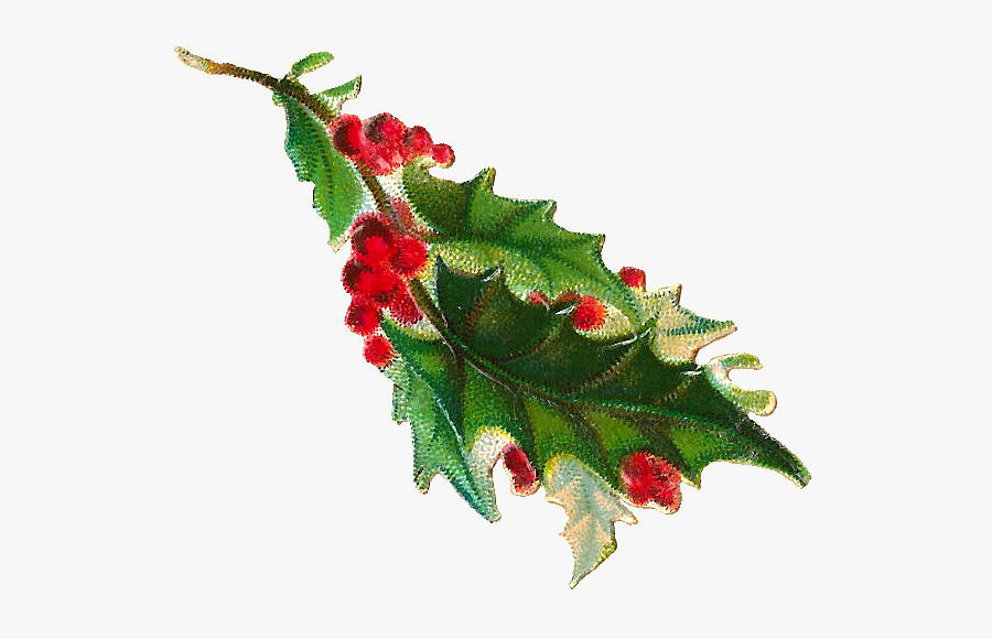 Vintage Christmas Holly Png , Free Transparent Clipart.