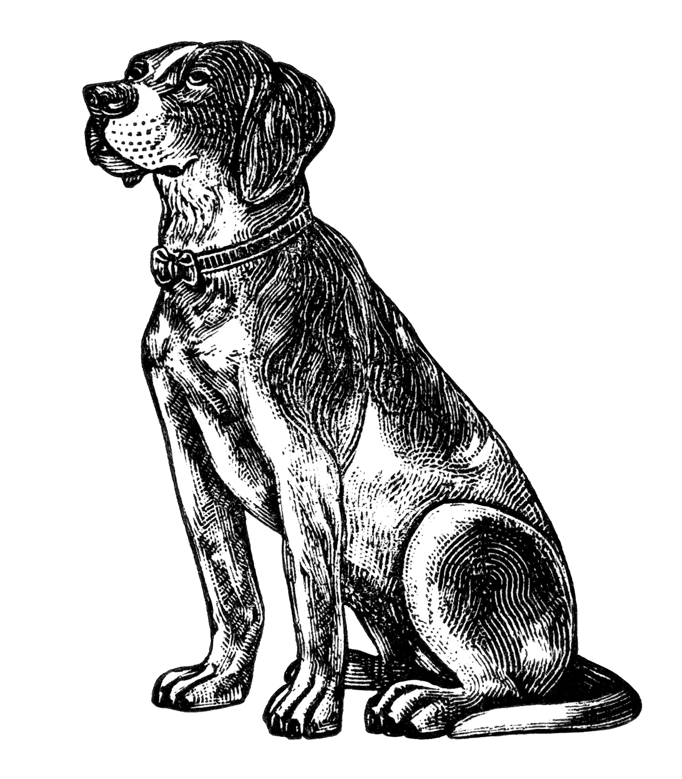 Dog Free Vintage Clip Art Old Design Shop Blog Transparent.
