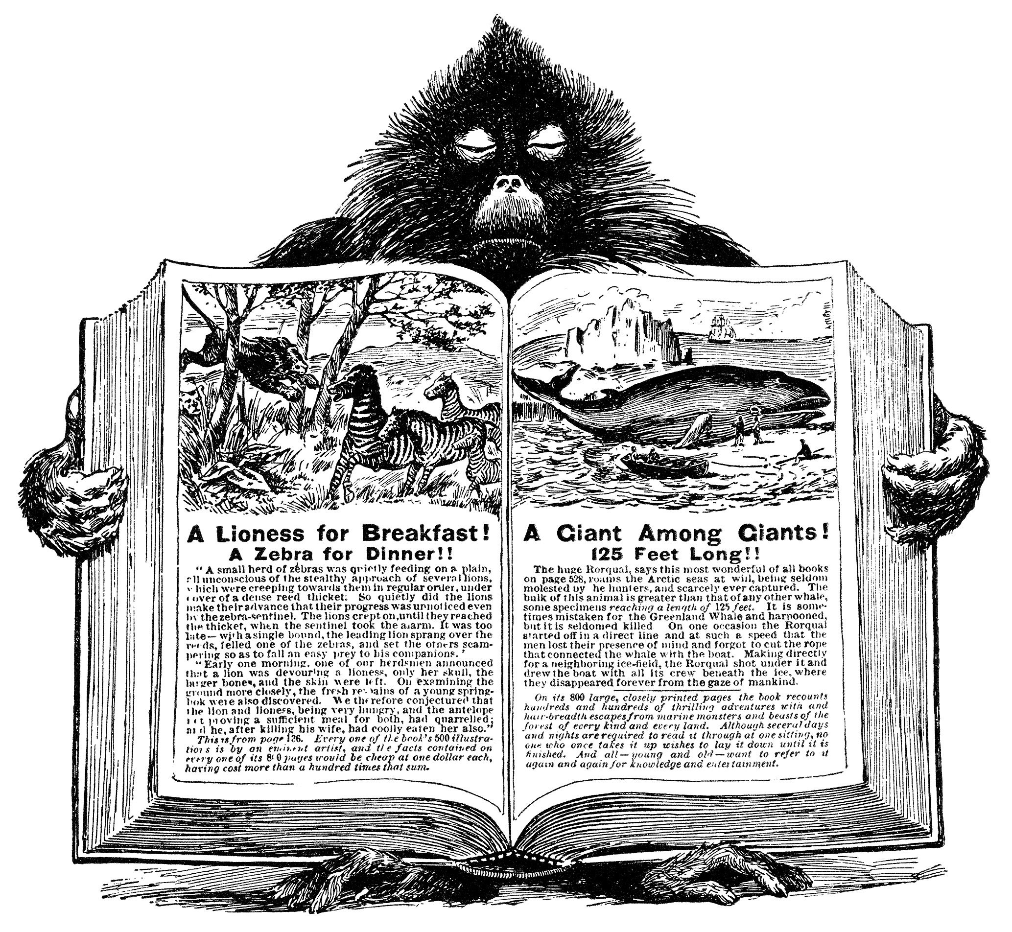 Baboon Holding Open Book ~ Free Vintage Clip Art.