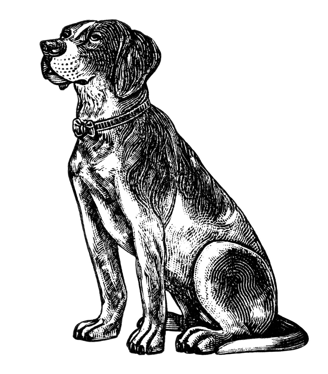free vintage dog clipart, black and white clip art, digital.