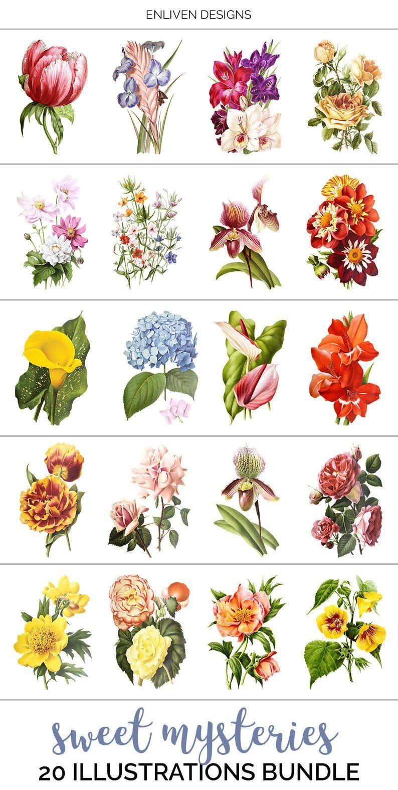 Flower Clipart Bundle.