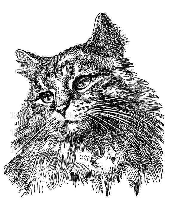 Vintage Cat Clip Art Illustration Digital Stamp Transfer.
