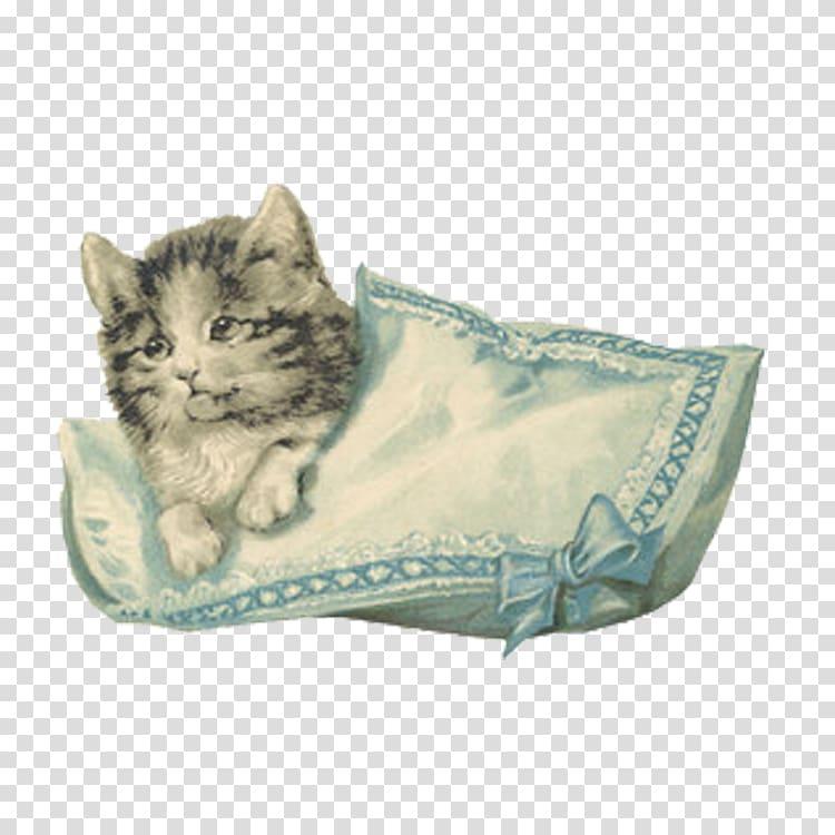 Kitten Pink cat Vintage clothing , Cute cat transparent.