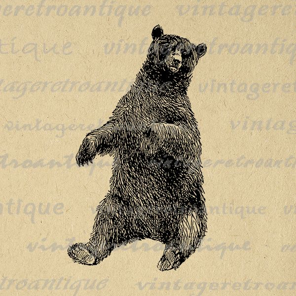 Printable graphic sitting bear antique animal image digital.