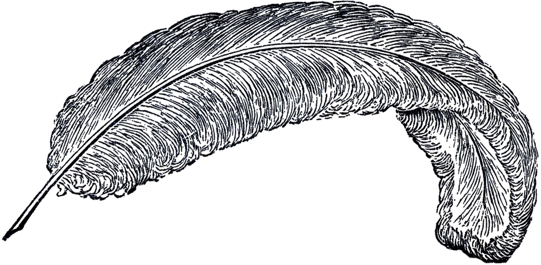 Free Vintage Feather Clip Art.