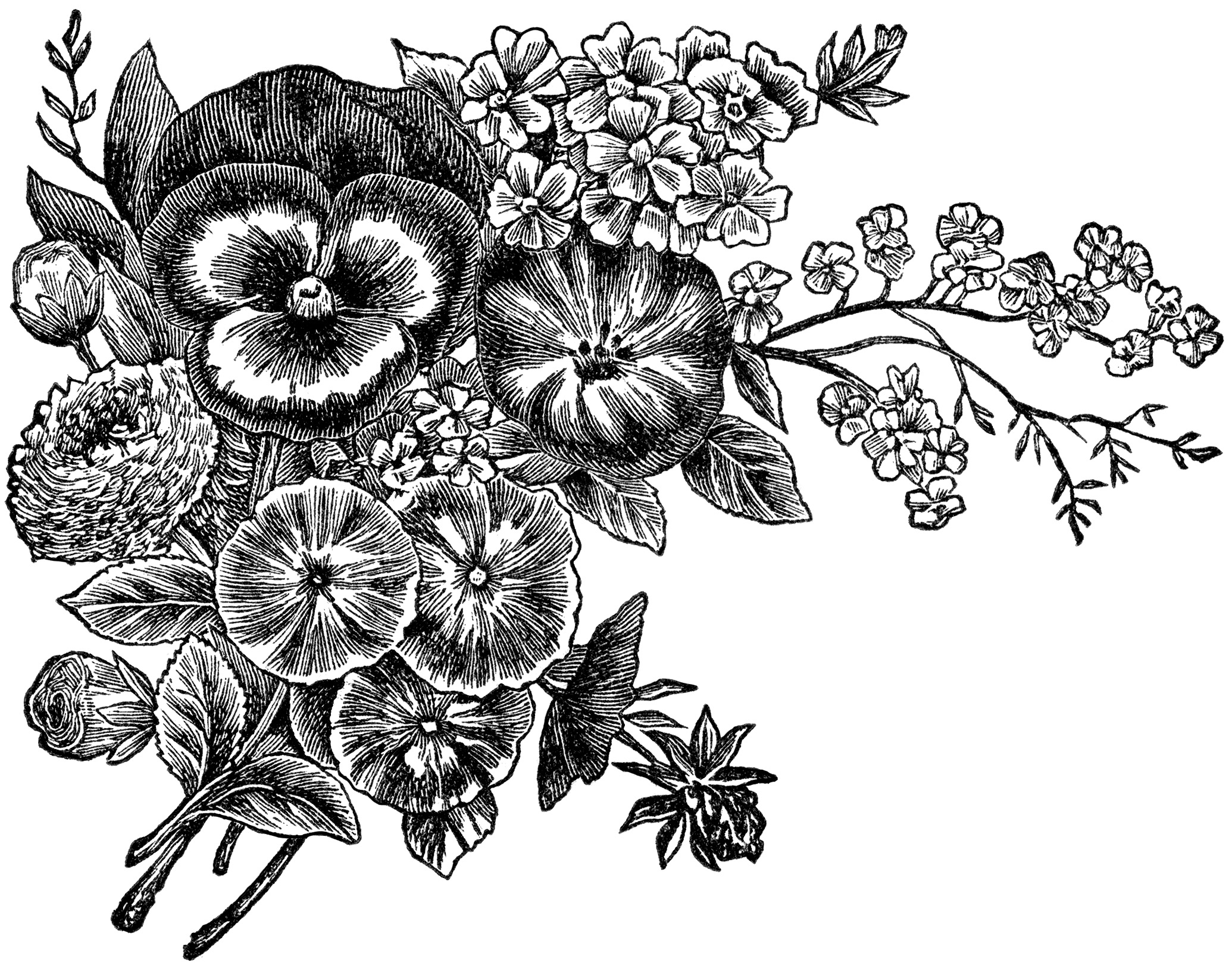 Free Vintage Black And White Flowers, Download Free Clip Art.