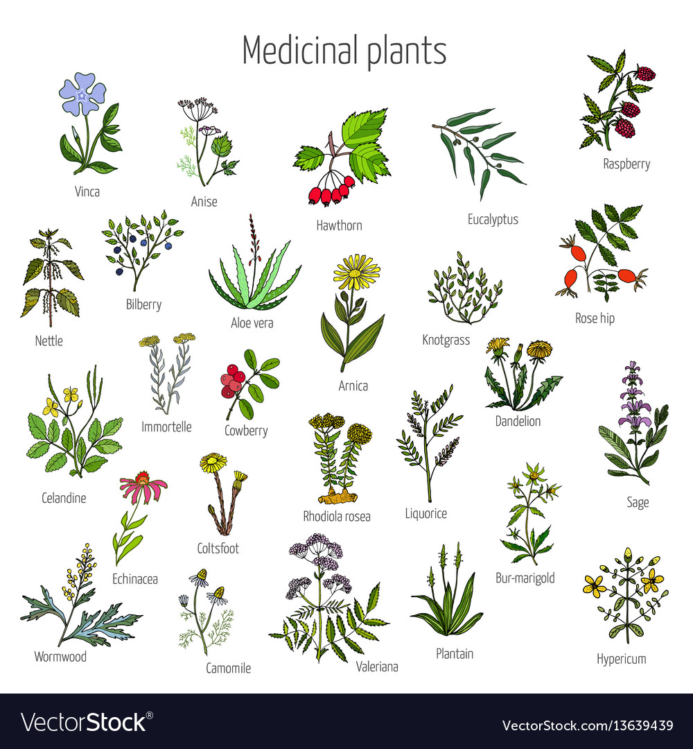 Vintage collection of medical herbs.