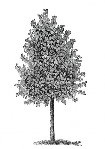 Tree Vintage Illustration Clipart Free Stock Photo.