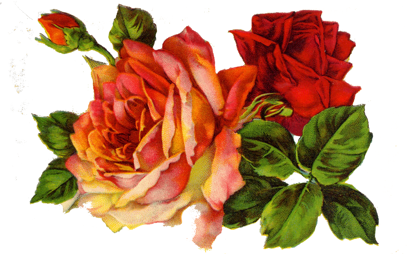 Decoupage Roses on Clipart library.