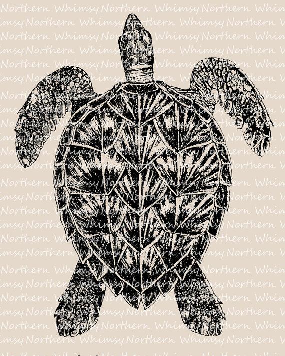 Sea Turtle Clip Art.