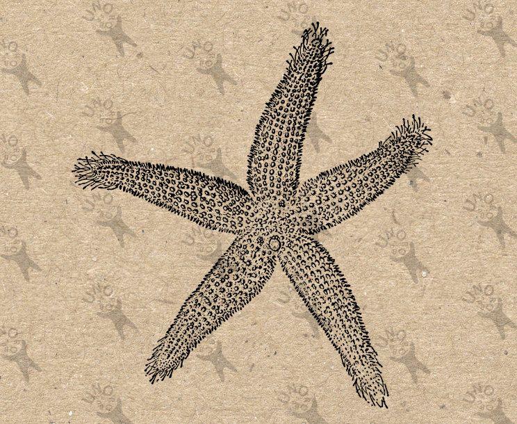 Starfish Vintage retro drawing image Ocean Life Instant.