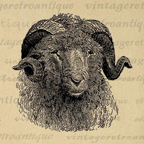 Pin by AMBERLEE on Sheep.