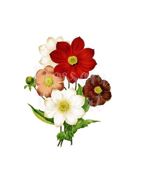 Clipart Floral Illustration, Vintage Floral Digital Download.
