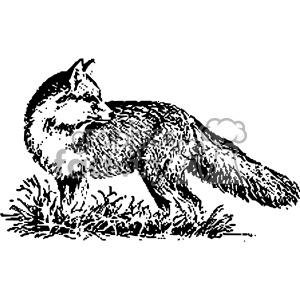 black and white fox vintage vector vintage 1900 vector art GF clipart.  Royalty.
