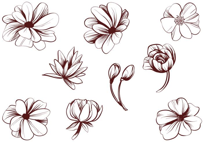 Free Vintage Detailed Flower Vectors.