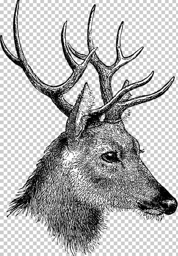 Vintage Deer Head PNG, Clipart, Animals, Deer Free PNG Download.