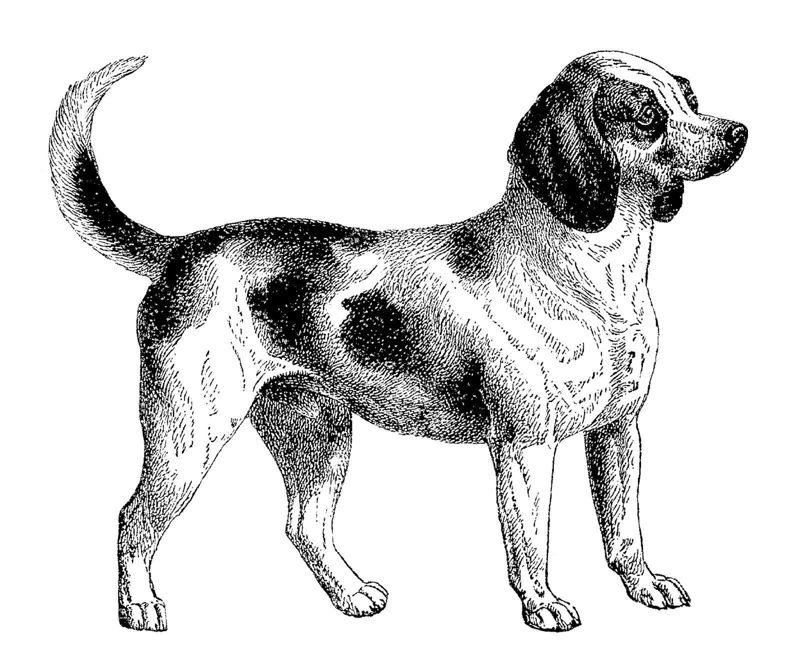 Antique Images: Digital Download of Beagle Dog Clip Art.