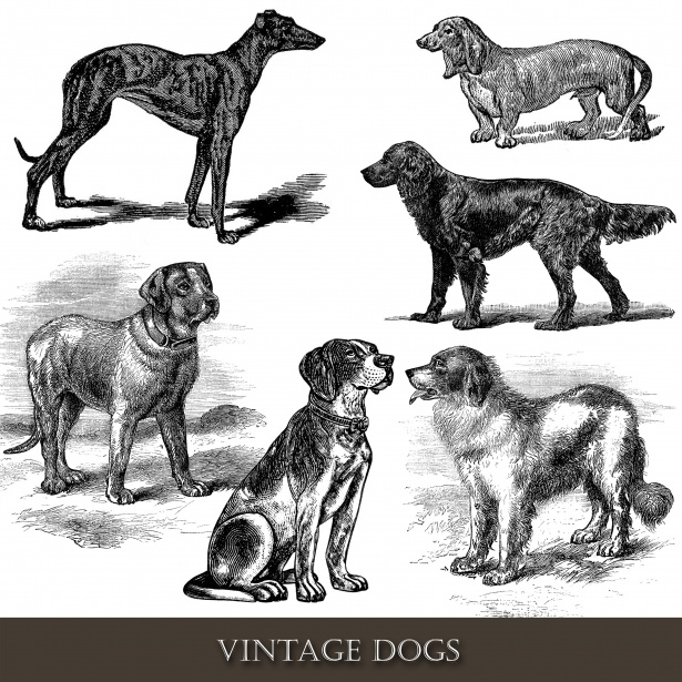Vintage Dogs Clipart Free Stock Photo.