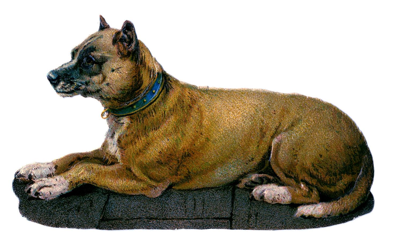 21 Vintage Dog Images!.