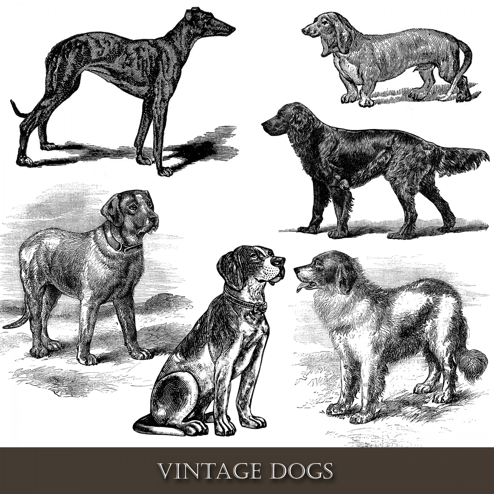 Dog,dogs,vintage,clipart,clip art.