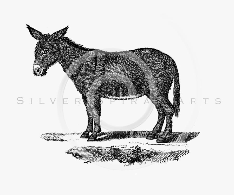 Drawing Donkey Gray.
