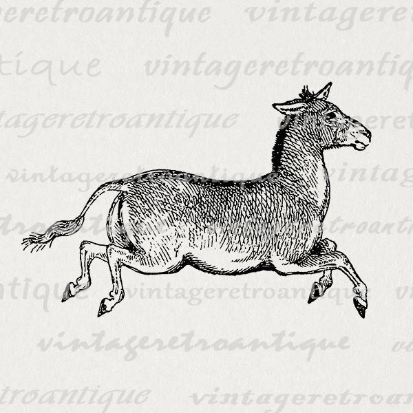Donkey Image Digital Printable Mule Graphic Download.