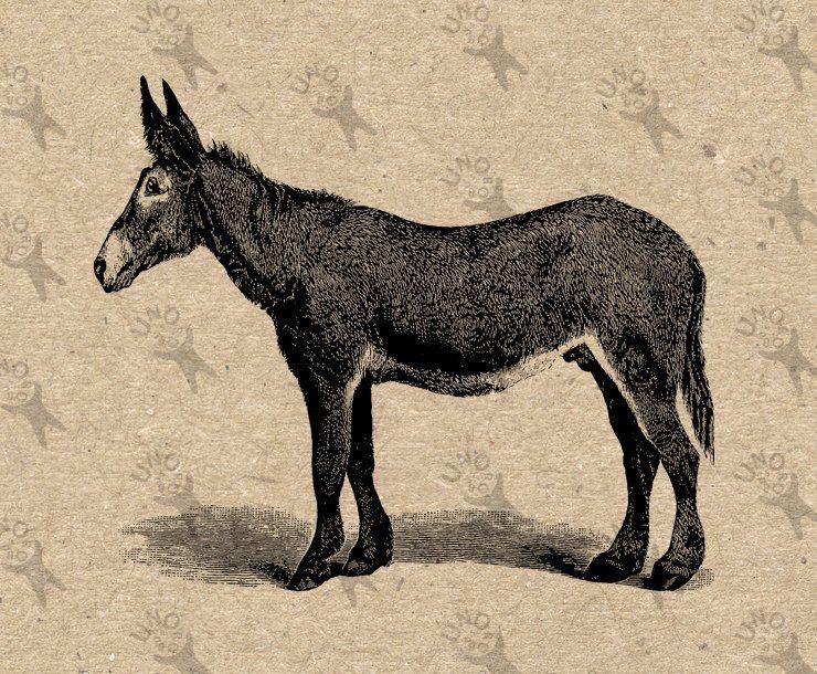 Vintage Mule Retro Drawing image Instant Download printable.