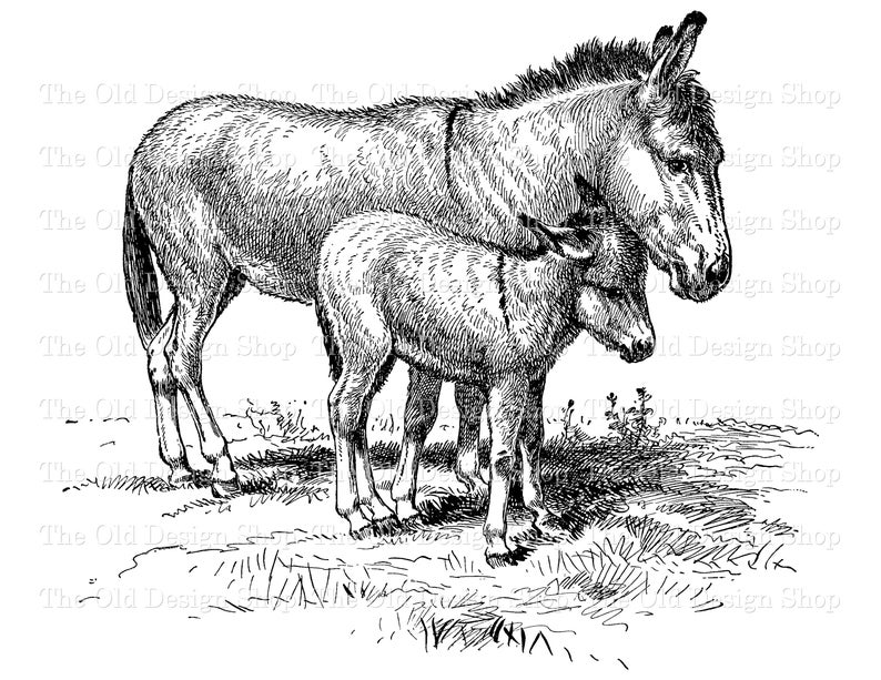 Donkey clipart foal, Donkey foal Transparent FREE for.