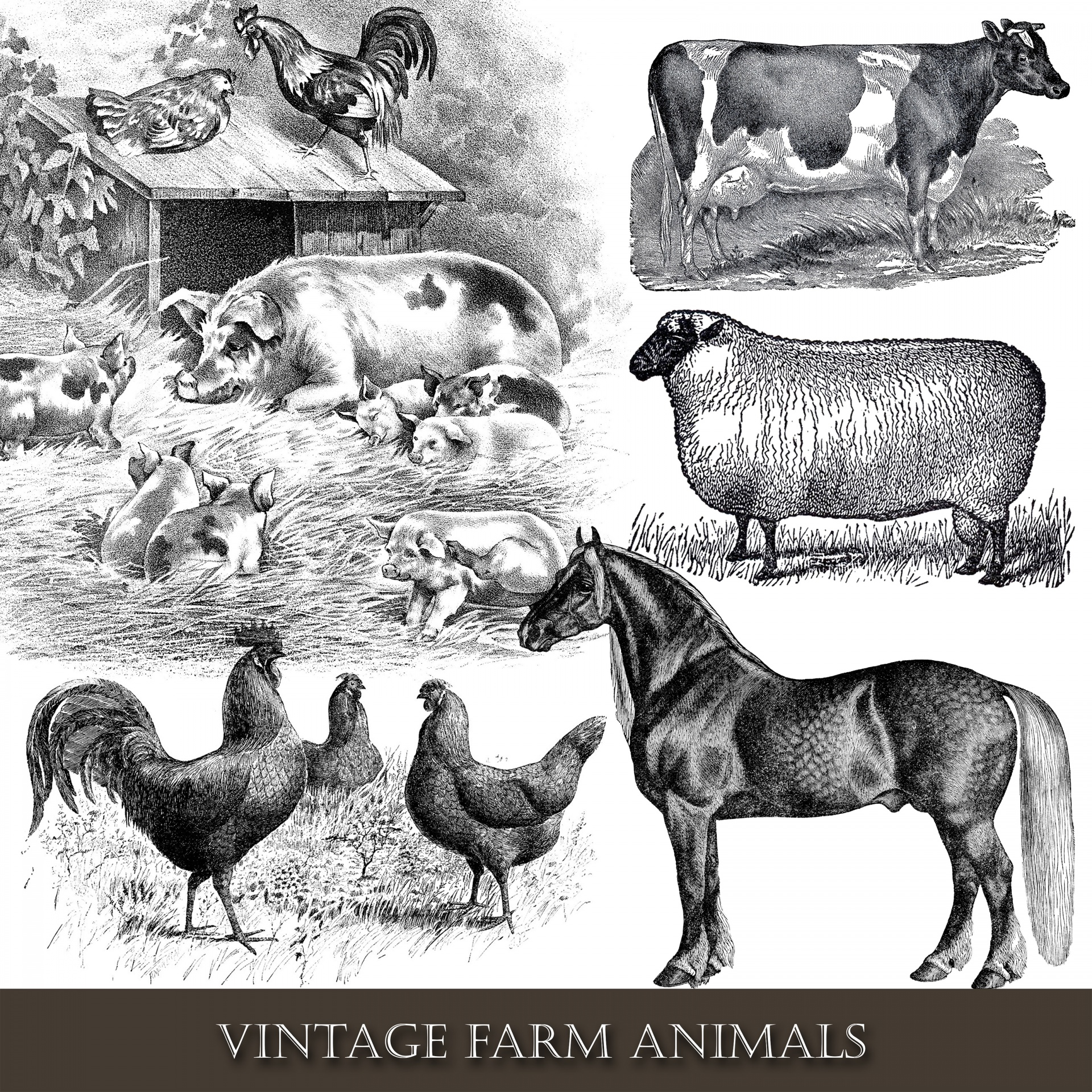 Farm Animals Vintage Clipart Free Stock Photo.
