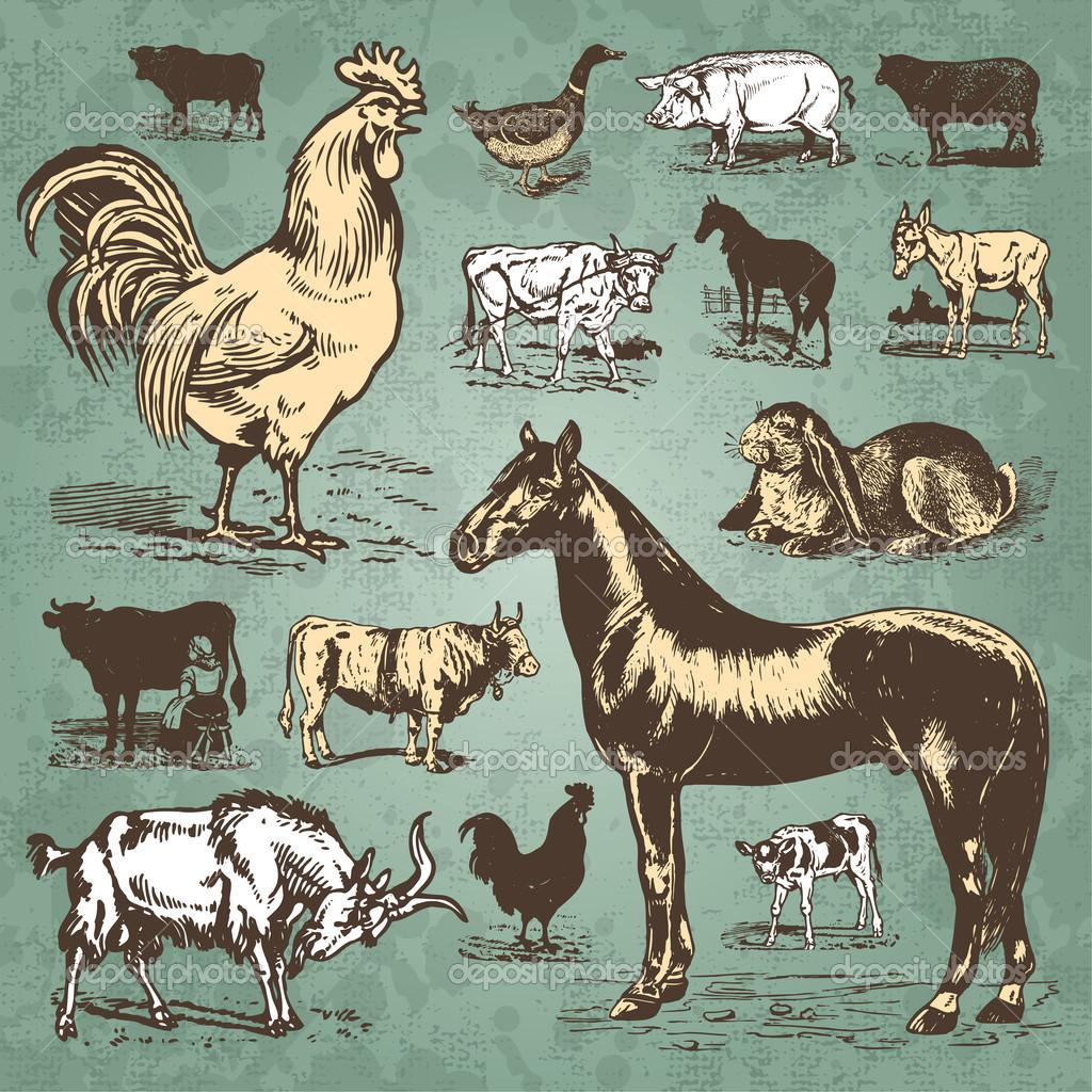 Antique Animal Illustrations.