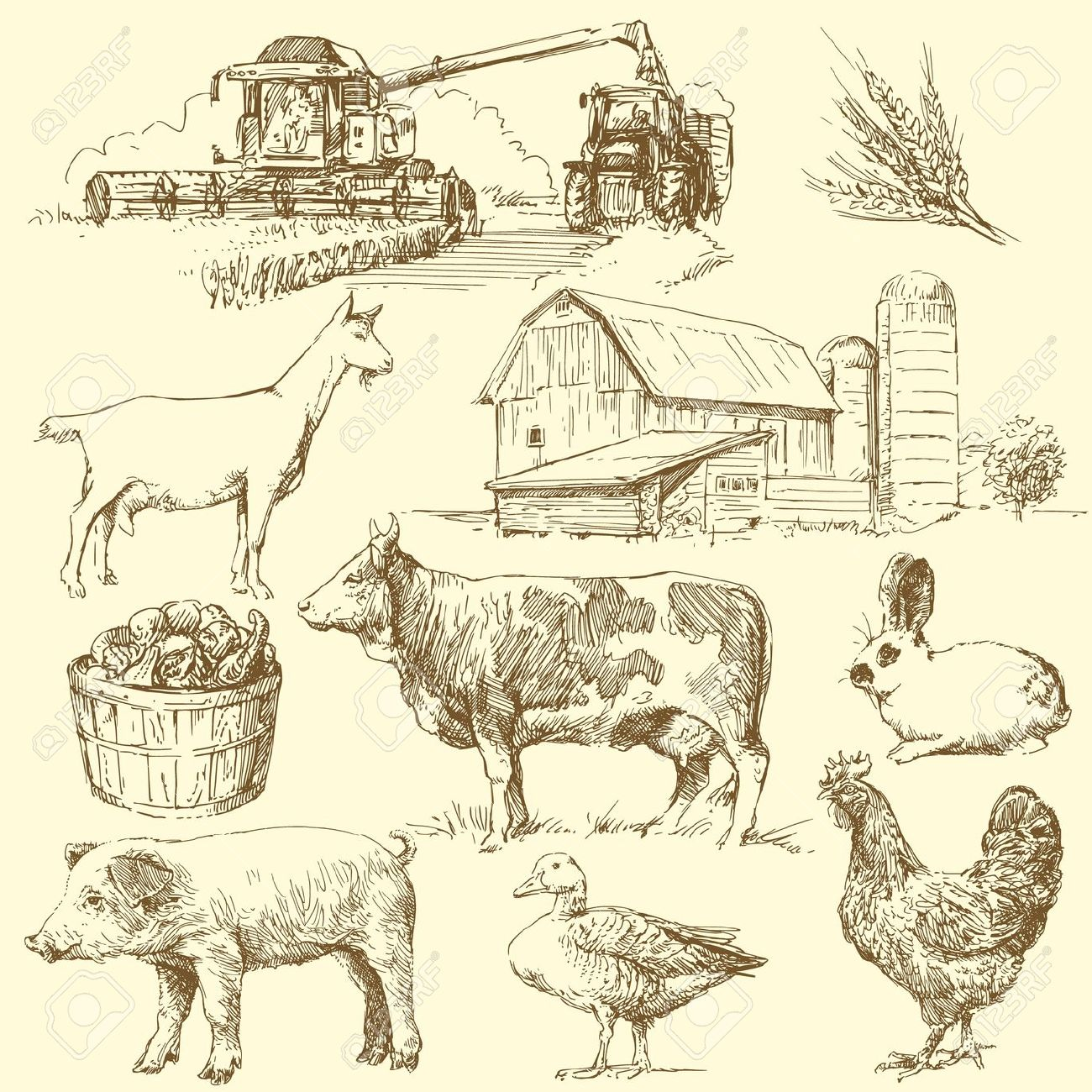 Vintage farm animal clipart.