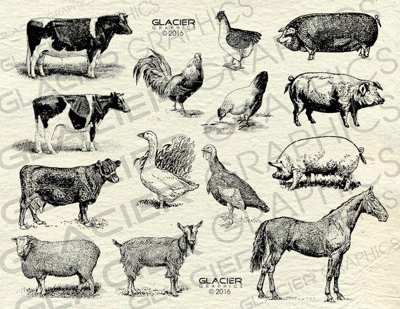 Vintage Farm Animal Illustrations Printable Farm Animals.