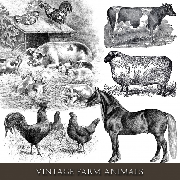Farm Animals Vintage Clipart Free Stock Photo.