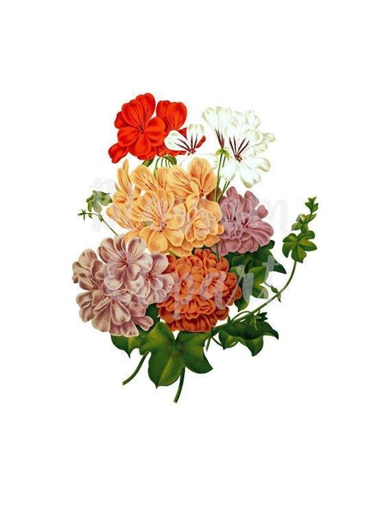 Digital Download Vintage Flower PNG Illustration, Clipart.
