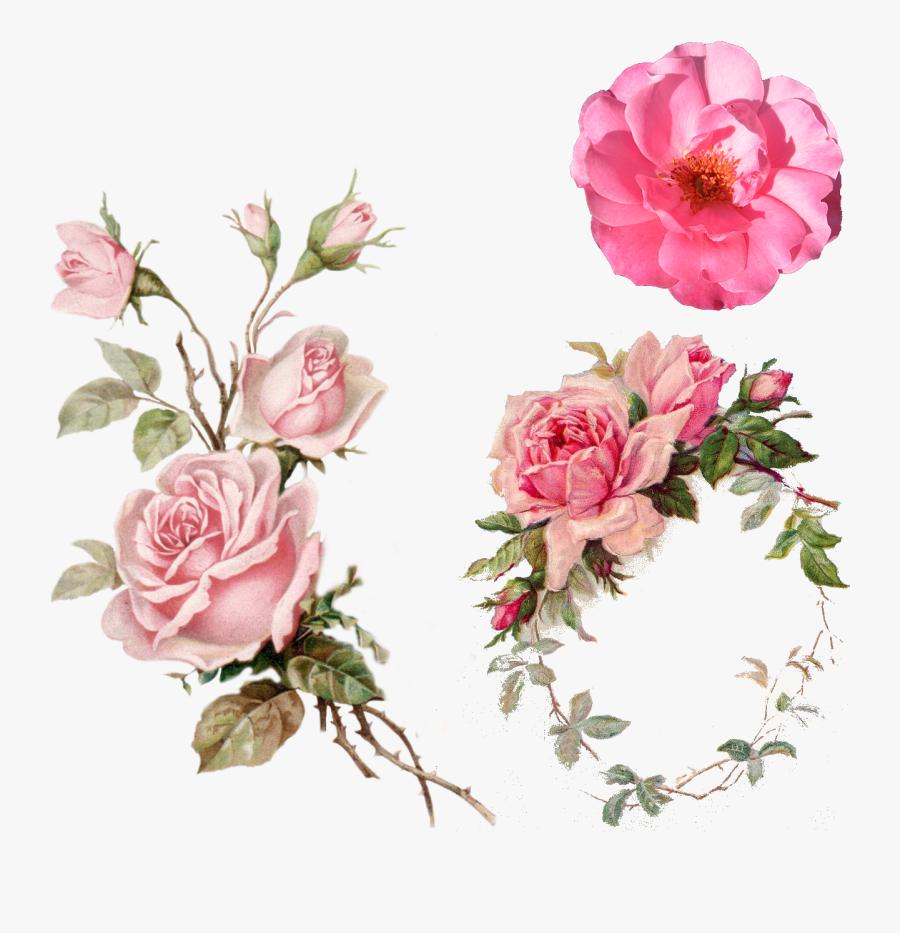 Pink Rose Vintage Clipart.
