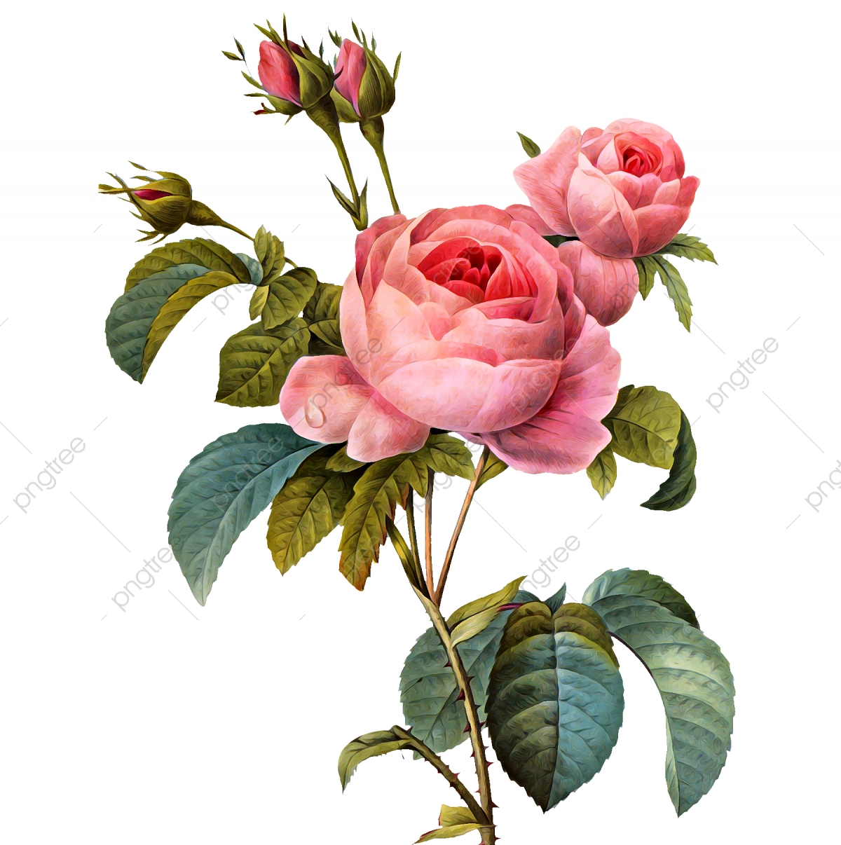 Vintage Flower, Clipart, Rose Flower PNG Transparent Clipart.