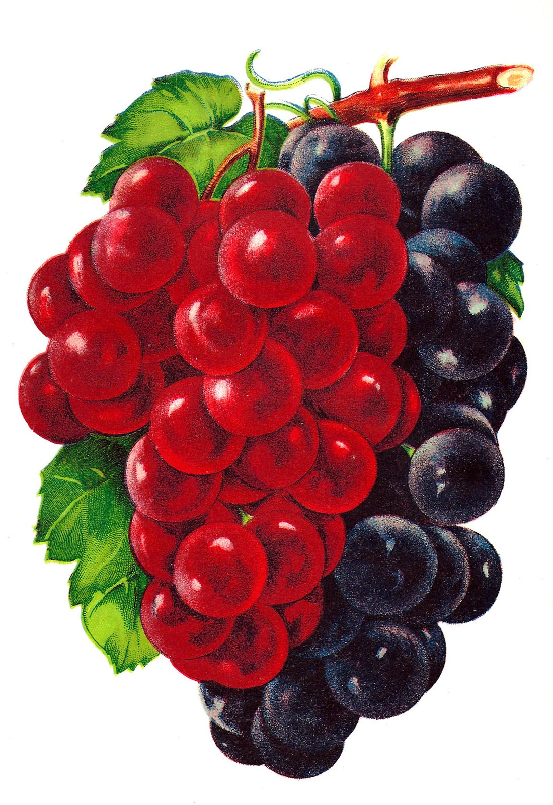 Free Vintage Raspberry Cliparts, Download Free Clip Art.
