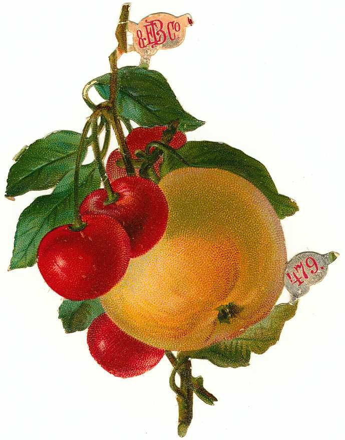 Free Victorian Flowers and Vintage Fruit Clip Art and.