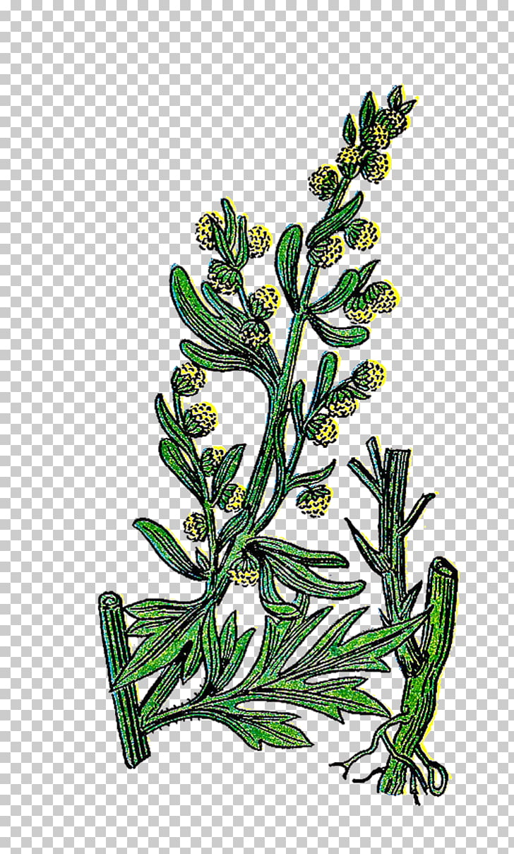 Herb Basil Rosemary , Vintage Herb s PNG clipart.