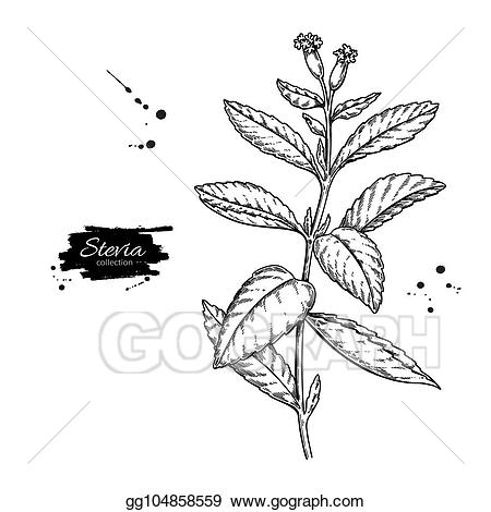 Vintage herbal clipart blac clipart images gallery for free.