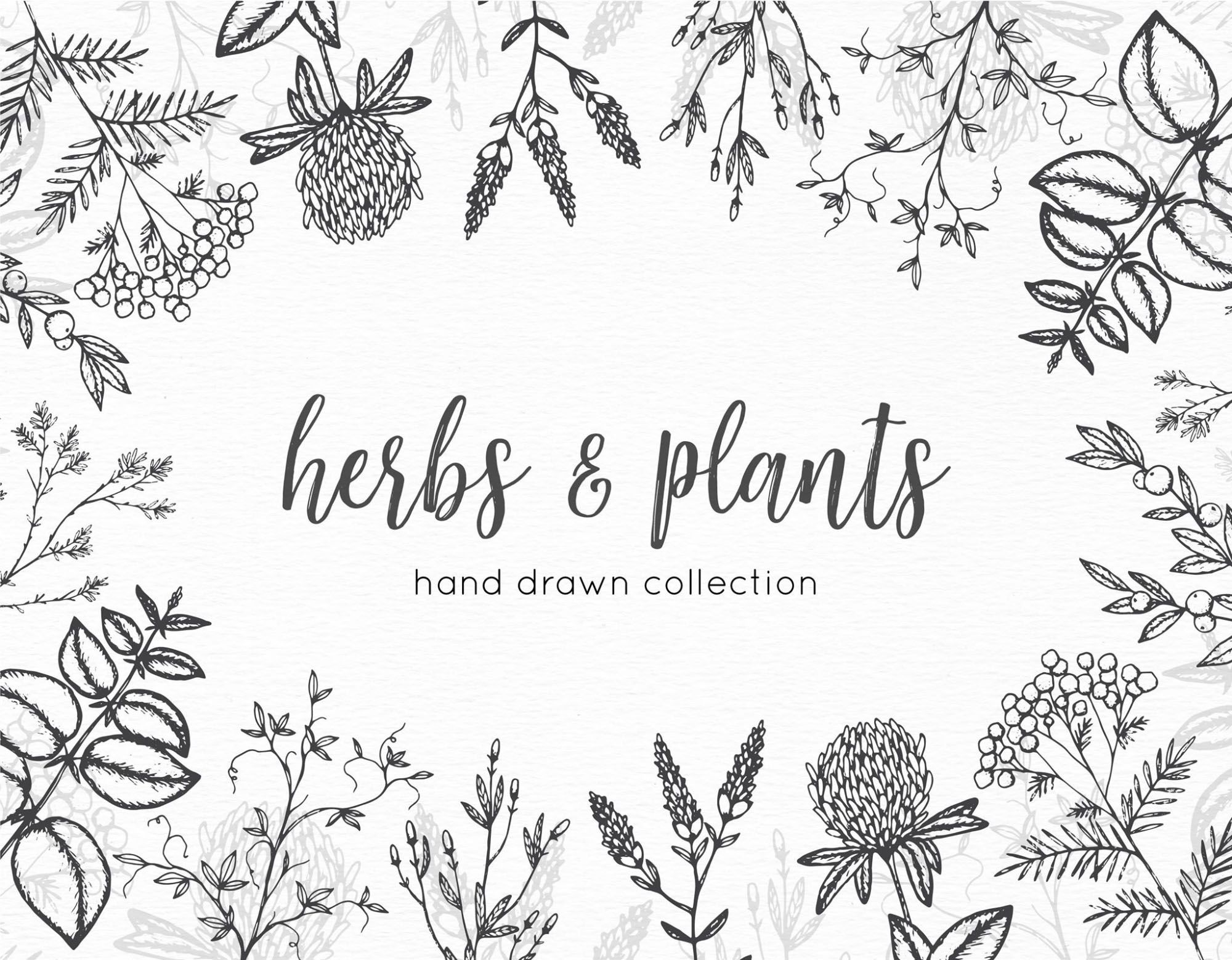 Herbs Vector Graphics drawings.