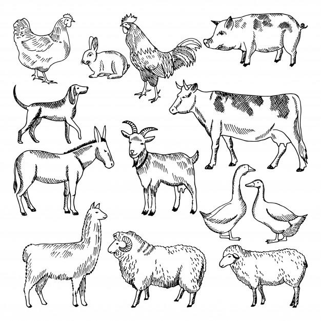 Vintage farm animals. farming illustration in hand drawn.