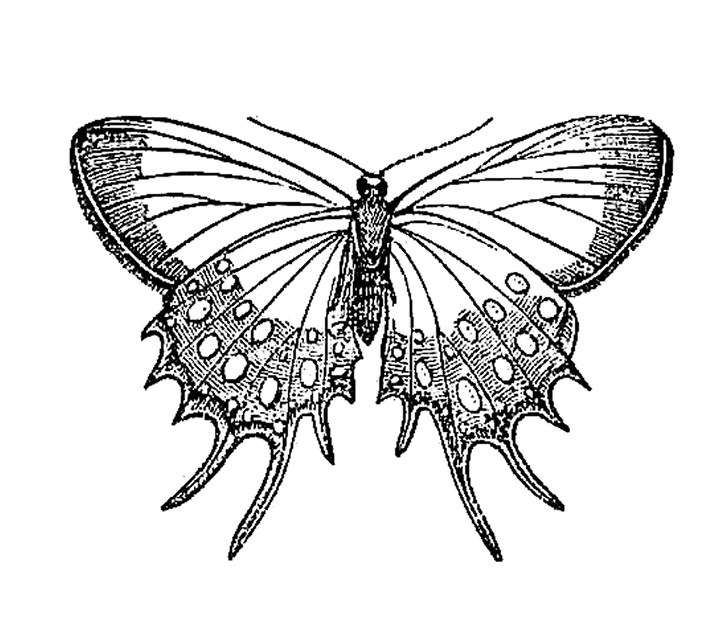 Vintage butterfly clipart.